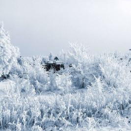 Зима в Лукино